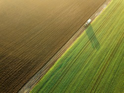 Young Wheat seedlings growing in a field Aerial view. Tractor
