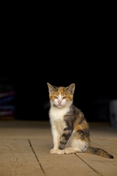 Young wild or barn cat, sitting on a barn floor. Space for copy or text.