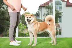 Young woman and adorable Akita Inu dog indoors. Champion training