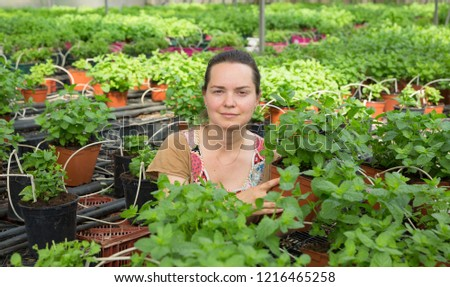 Young woman farmer arranging spearmint in  pot in sunny greenhouse  #1216465258