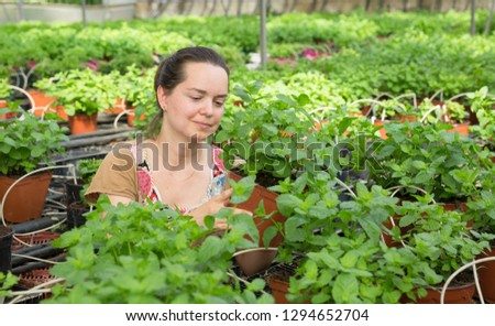 Young woman farmer arranging spearmint in  pot in sunny greenhouse  #1294652704