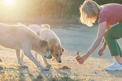 Young woman feeding streed abandoned dogs with dog food. Animal charity volunteer concept.