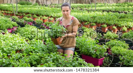 Young woman gardener arranging peppermint while gardening in hothouse #1478321384