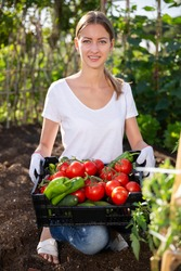 Young woman gardener holding basket with harvest of fresh tomatoes and peppers in  garden
