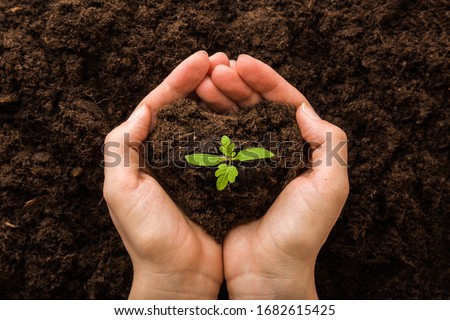 Young woman hands holding green, small tomato plant with ground. Early spring preparations for garden season. Closeup. Point of view shot. Stock photo ©
