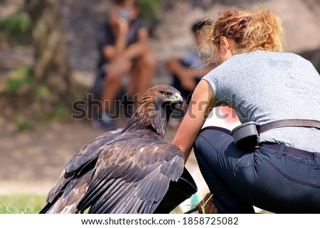 Young woman holding an eagle on her hand. Female biologist or veterinarian showing natural behavior. Golden eagle (Aquila chrysaetos) on the hand of its trainer. Girl teaching falconry.  Photo stock ©