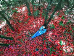 Young woman on red leave fall forest, Travel lifestyle concept, fallen red meple leaves