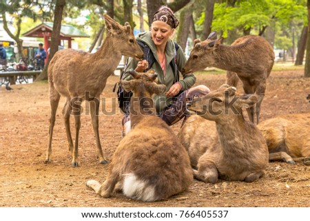 Young woman petting four deer in Nara park of Japan. Wild sika are considered a natural monument. Tourism in Japan concept.