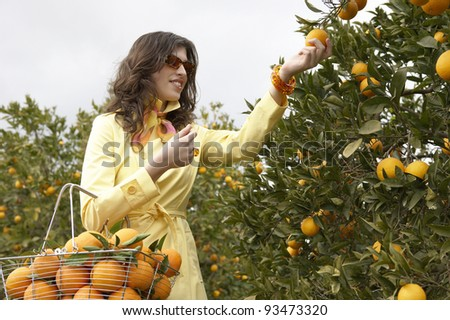 Young woman picking an orange from a tree while holding a supermarket shopping basket full of oranges.