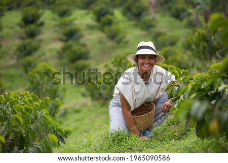 young woman picking up coffee beans in Colombia Stock fotó ©