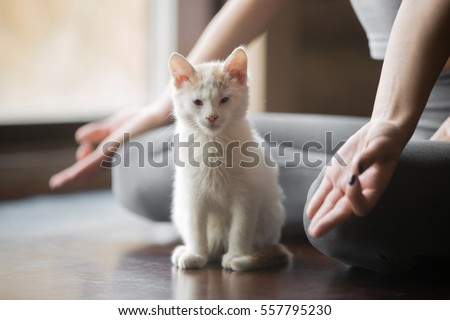 Photo of Young woman practicing yoga, sitting in Half Lotus exercise, Ardha Padmasana pose, working out, wearing sportswear, grey pants, indoor, home interior background, white cute cat near her, close up