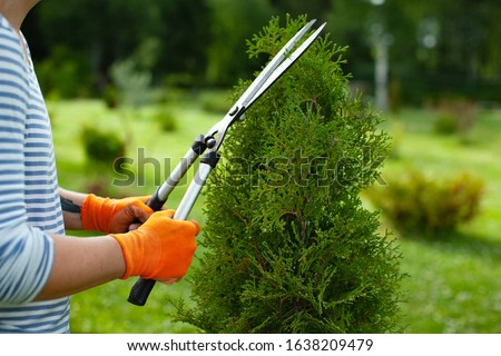 Young woman pruning bushes, copy space