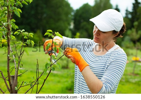 Young woman pruning bushes, gardening concept
