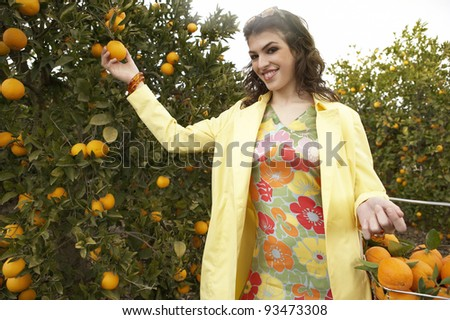 Young woman reaching for an orange from a tree while standing in an orange grove.