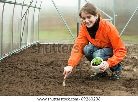 young woman resetting  sprouts in bed at hothouse