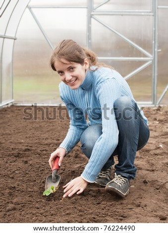 young woman resetting  strawberry sprouts in bed at hothouse