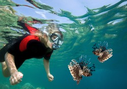 Young woman snorkeling with lionfish