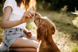 Young woman training her little dog, cocker spaniel breed puppy, outdoors, in a park.