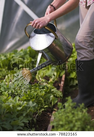 Young woman watering plants in glasshouse close up