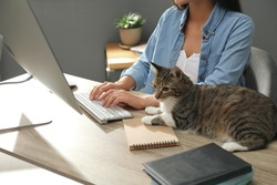 Young woman with cat working on computer at table, closeup. Home office concept