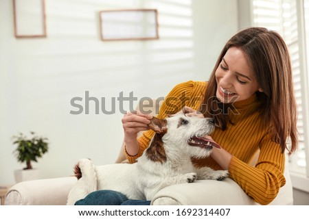 Young woman with her cute Jack Russell Terrier in armchair at home. Lovely pet