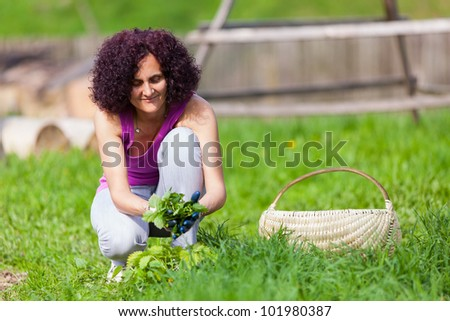Young woman with protection gloves picking nettles in a basket