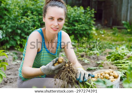 Young woman working in garden, harvesting unwashed organic potatoes from the soil.