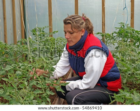 Young woman working in greenhouse with tomato plants
