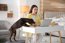 Young woman working on laptop near her playful dog in home office