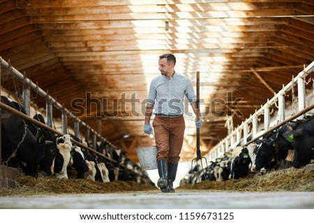 Young worker of cattlefarm with bucket and hayfork walking along two stables with dairy cows