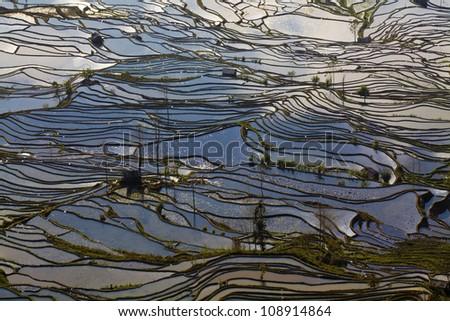 Yuanyang Hani Rice Terraces,China.