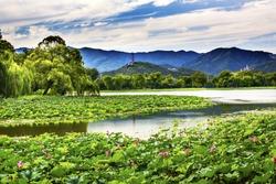 Yue Feng Pagoda Pink Lotus Pads Garden Reflection Summer Palace Beijing China