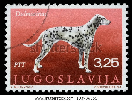 "YUGOSLAVIA - CIRCA 1988: A stamp printed in Yugoslavia shows the Dalmatian from the series ""Dogs"", circa 1988"