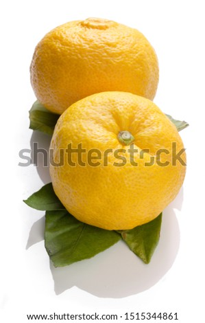 Yuzu fruits famous for aromatic zest (Hybrid between Citrus ichangensis and Citrus reticulata), isolated on white background #1515344861