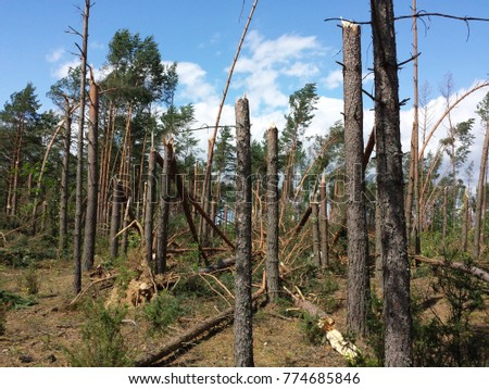z?amane drzewa po burzy Zdjęcia stock ©
