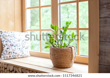 Zamioculcas home plant in a straw pot on a windowsill. Comfort. The decor of the room. The concept of home gardening. Zamioculcas potted on the windowsill of the house. Scandinavian. place for text