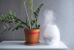Zamioculcas. Plants in the interior. Flower pot with succulent. Humidifier. fog generator