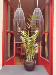 Zamioculcas Zamiifolia flower in the exterior of an open modern cafe on a street in the old city of Germany on a summer day.Bright red doors, large wooden hanging lights.Street design