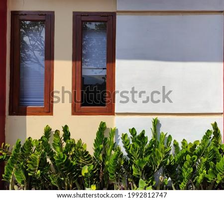 Zamioculcas Zamiifolia tree under the window