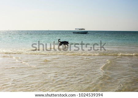 ZANZIBAR, TANZANIA - January 2018: Happy dog playing in the water on the beach of Zanzibar, Tanzania #1024539394