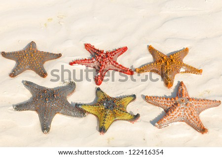 """Zanzibar, Tanzania starfish or sea stars are echinoderms belonging to the class Asteroidea. The names """"starfish"""" ; and """"sea star"""" essentially refer to members of the class Asteroidea."""