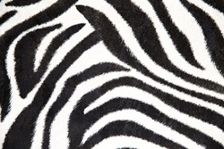 zebra background, black and white stripes