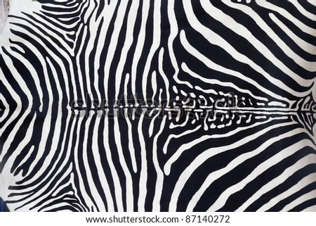 Zebra leather skin texture painted from a cow