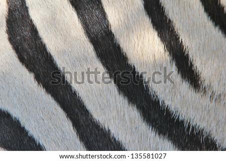 Real zebra pattern - photo#20