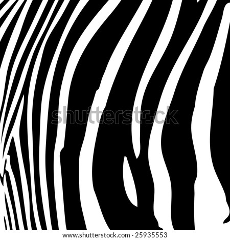 wallpaper zebra stripes. stock photo : Zebra stripes
