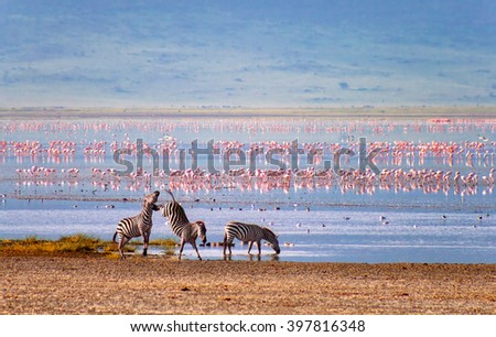 Zebras and flamingos in the Ngorongoro Crater Stock photo ©