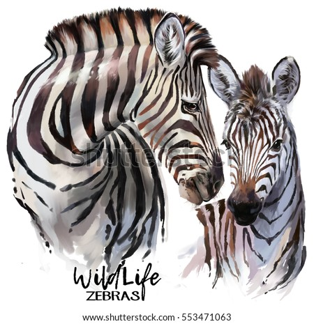 Stock Photo Zebras painting