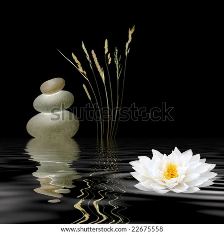 Zen abstract of grey spa stones, a white lotus lily and wild grasses with reflection over rippled water, against black background.