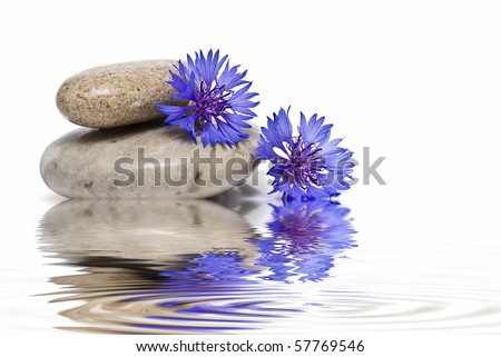Zen balance with flowers and water.