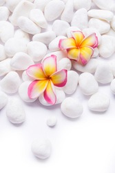 Zen concept with pile of stones and two pink frangipani on white background, space for text.